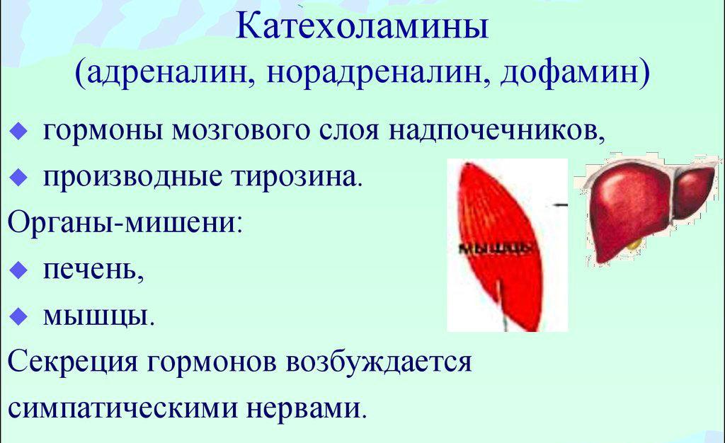 Катехоламины — sportwiki энциклопедия