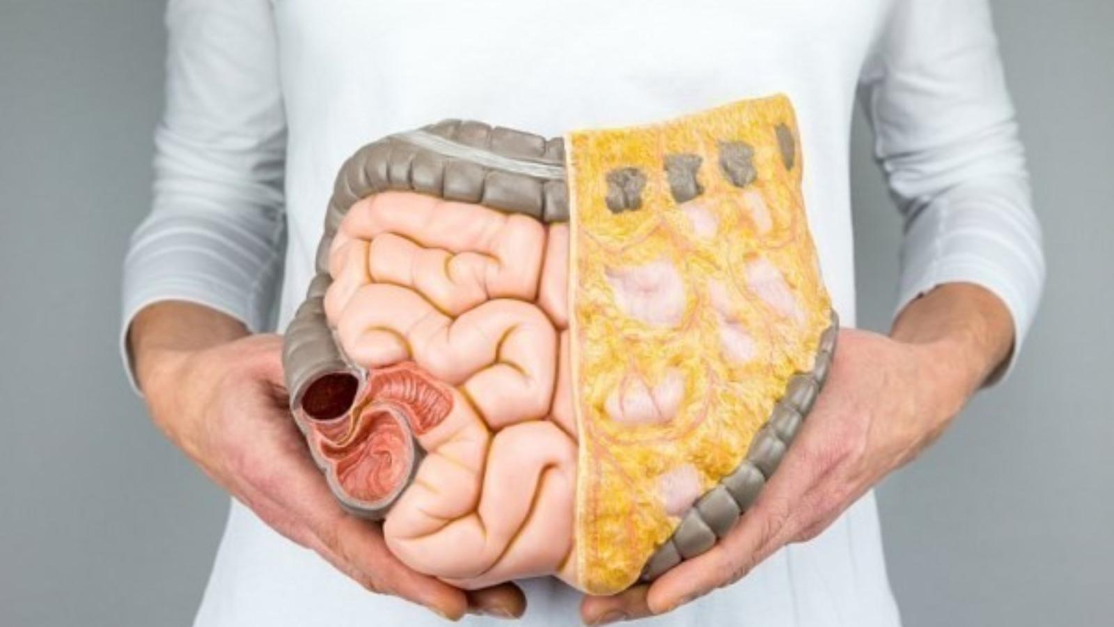 Что такое кишечник?