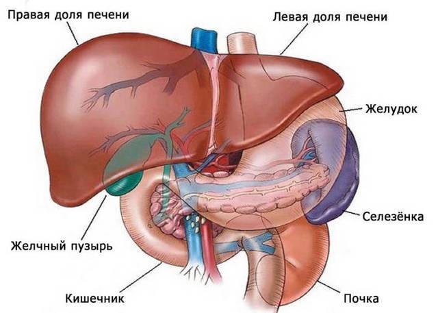 Диффузные изменения паренхимы печени и поджелудочной железы - причины и лечение