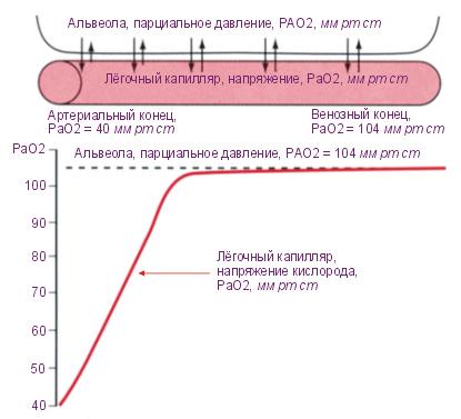 Дайвинг, газы. понимание принципов за 10 минут (keynotes)алексей павлюц | алексей павлюц