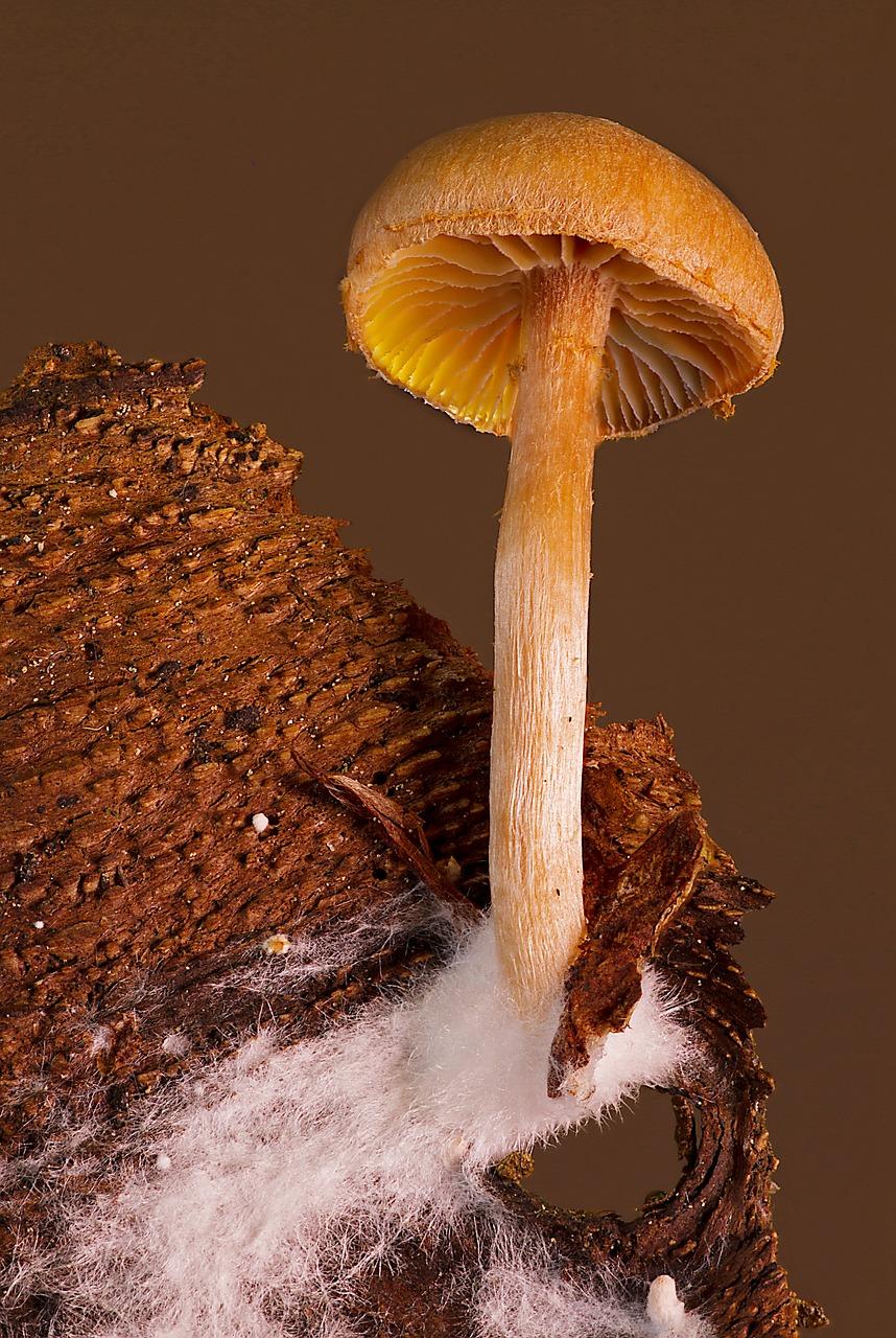 Мицелий грибов: что это такое и как выглядит, как вырастить на даче и в домашних условиях?