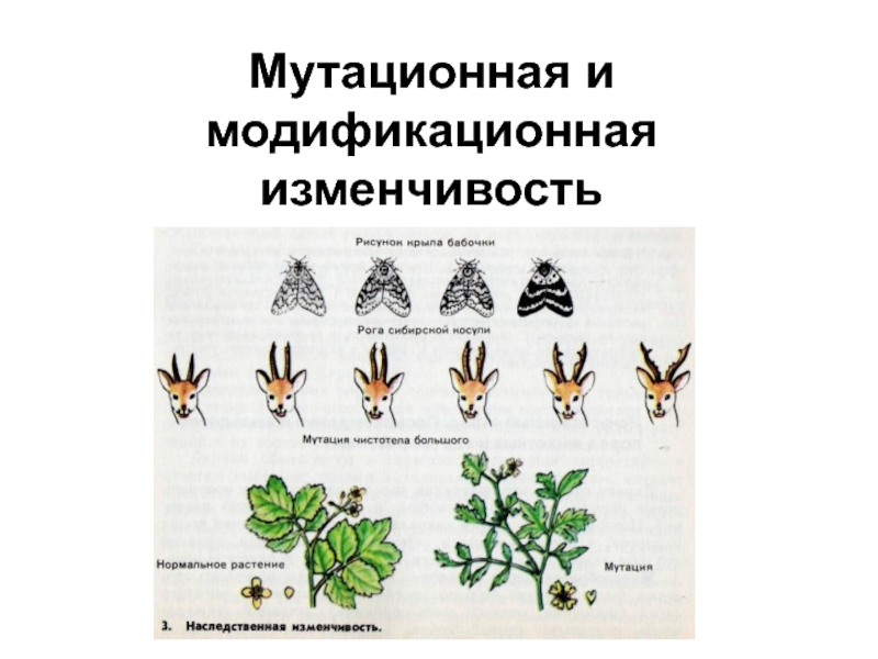 Причины мутаций. соматические и генеративные мутации
