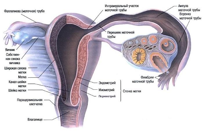 Непроходимость маточных труб: что это такое. причины, симптомы и лечение непроходимости маточных труб |             эко-блог