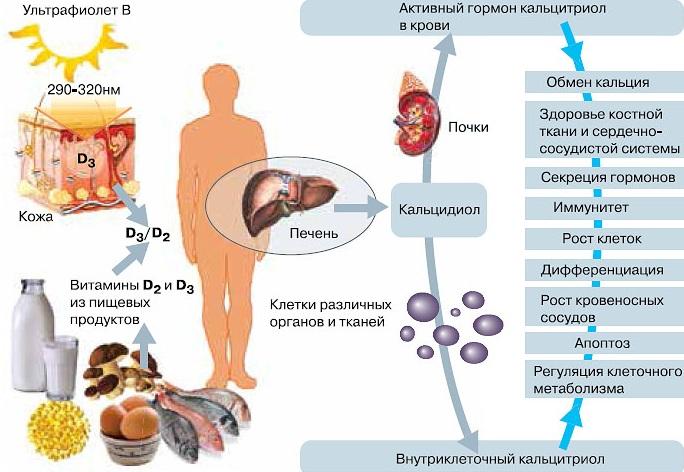 Узнайте, для чего нужен витамин д и как правильно его принимать