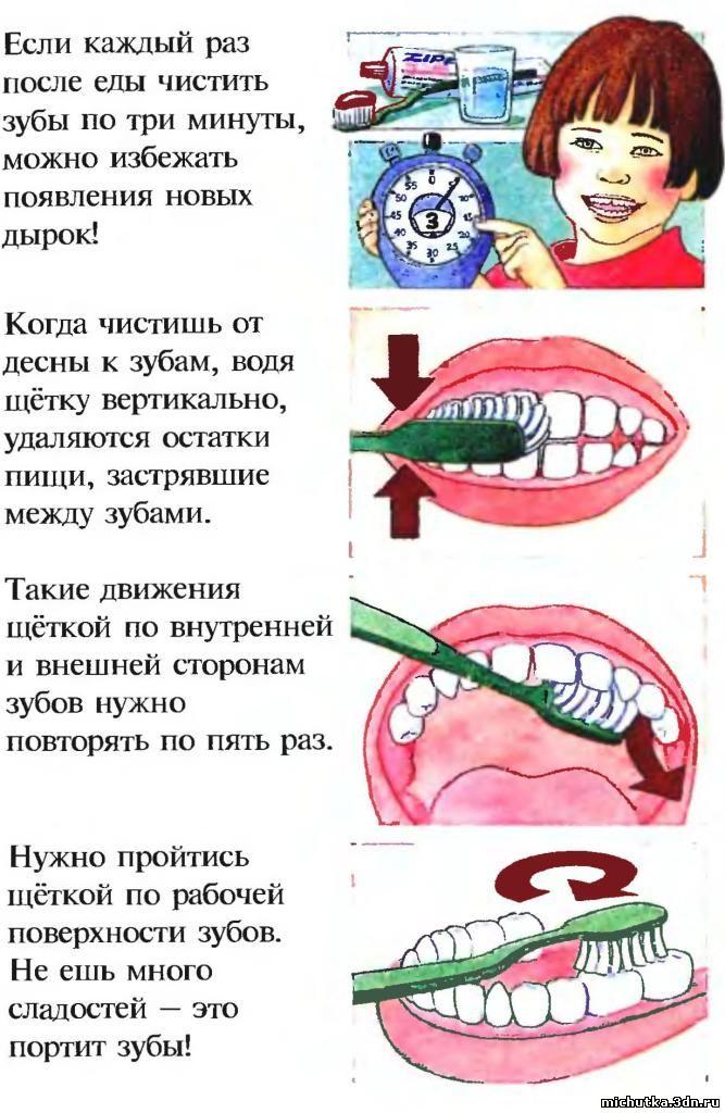 Анатомическое строение зубов человека: подробное описание с картинками, схемами и фото