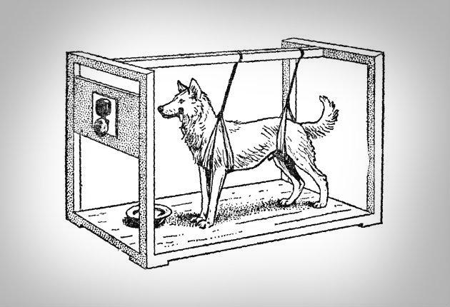 Подробное описание эксперимента с собакой павлова и что это такое