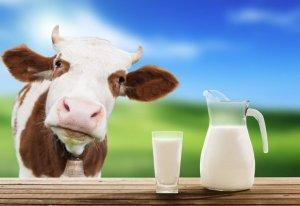 Цельное молоко: что это такое, жирность коровьего молока по госту, польза и вред продукта