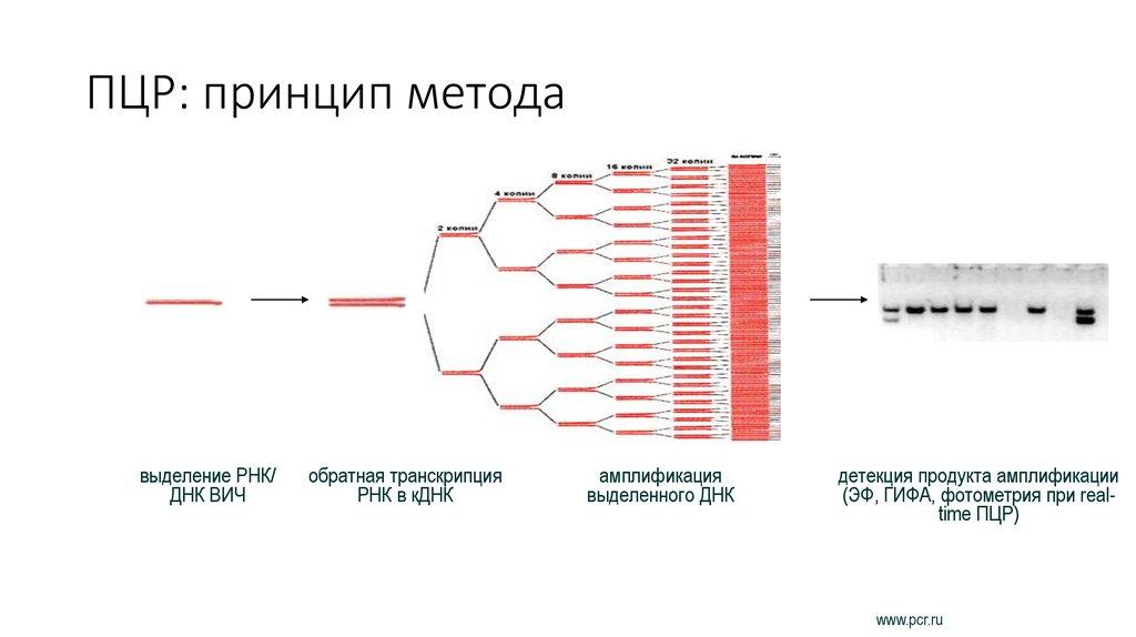 Что такое молекулярная диагностика пцр и преимущества анализа крови