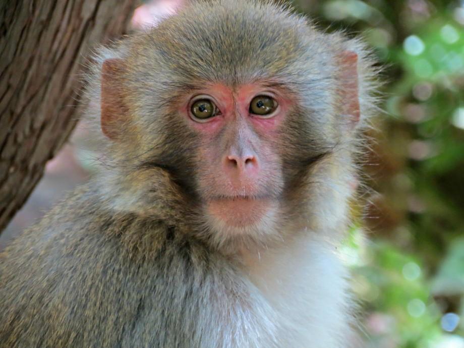 Виды обезьян: фото, видео, названия, особенности, описание, питание и размножение