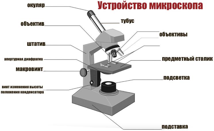 Виды микроскопов: описание, основные характеристики, назначение. чем электронный микроскоп отличается от светового?