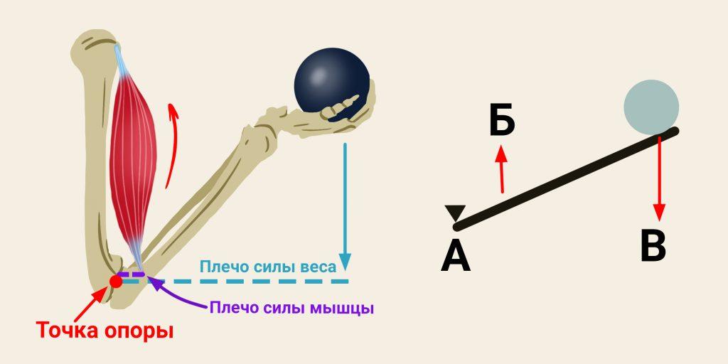 Как делать тягу верхнего блока, чтобы накачать спину и не повредить плечи - лайфхакер