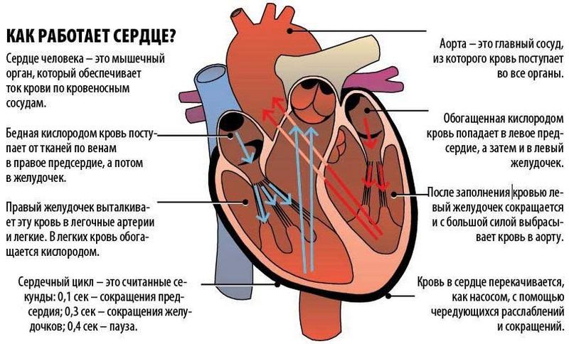 Что такое общее периферическое сопротивление? системное артериальное давление. общее периферическое сопротивление сосудов что такое опсс в кардиологии - меднаука