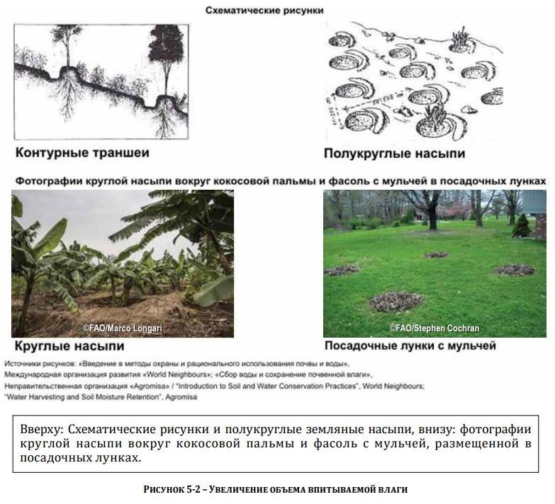 2. что такое почва в определении классиков почвоведения. чем она отличается от породы