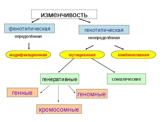 Мутационная и модификационная изменчивость. виды изменчивости. модификационная изменчивость, её свойства. наследственная изменчивость: комбинативная и мутационная