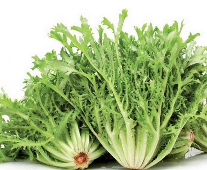 Витлуф, эндивий и эскариол – полезные цикорные салаты, которые несложно выращивать | на грядке (огород.ru)