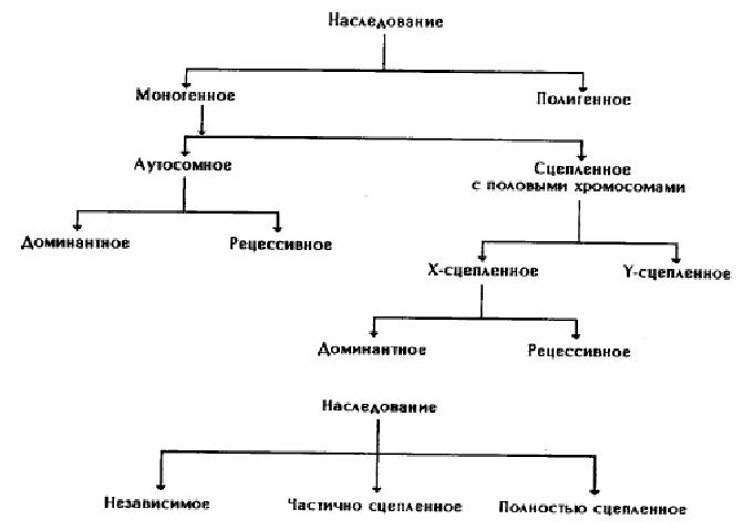 Наследственность и изменчивость организмов. история развития генетики. основные понятия и термины. методы генетических исследований | биология