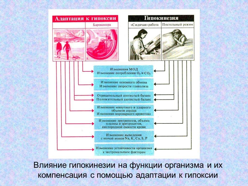 Гипокинезия и ее последствия для организма