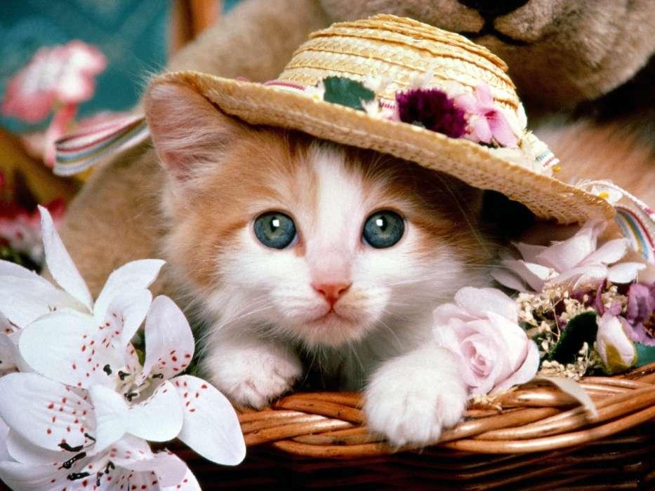 Котик, пётр — википедия. что такое котик, пётр