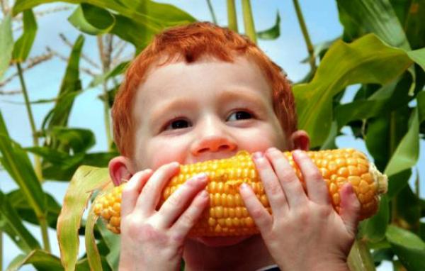 Кукуруза это овощ или фрукт, биологическое описание и происхождение