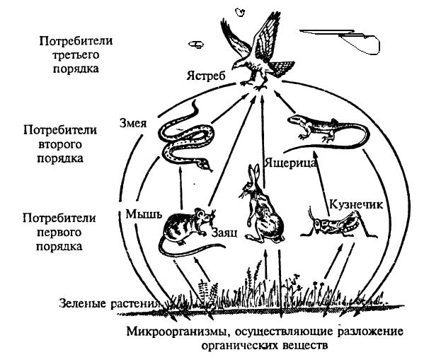 Продуценты, консументы, редуценты - функции, примеры и роль в экосистеме - помощник для школьников спринт-олимпик.ру