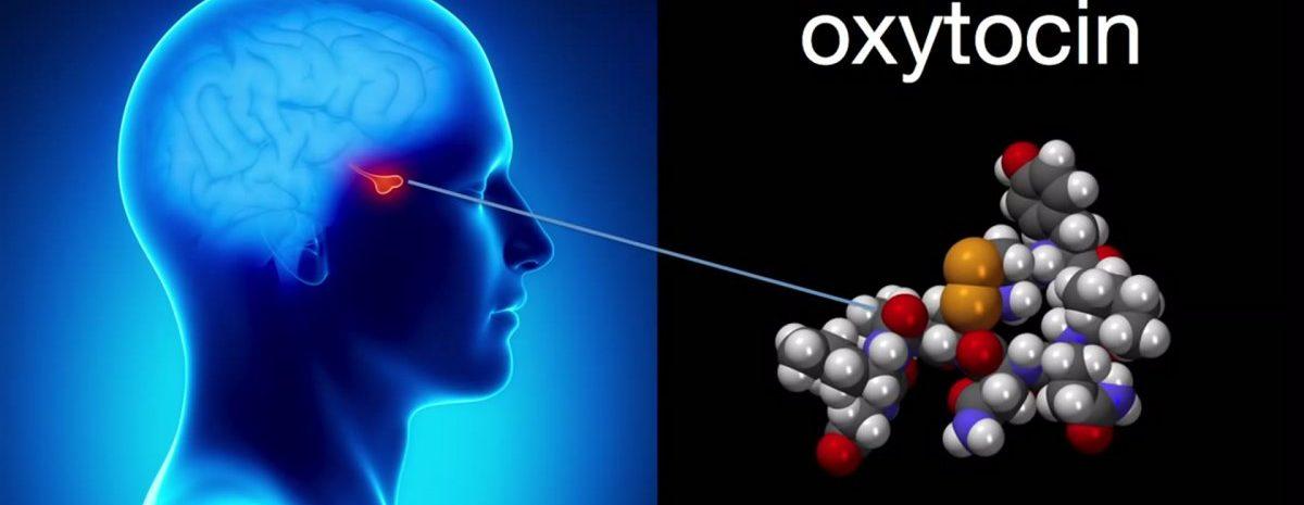 Вазопрессин и окситоцин: влияние на организм секреции нейрогипофиза
