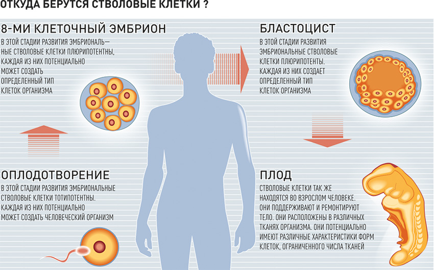 Опасны ли стволовые клетки для омоложения? (только правда)
