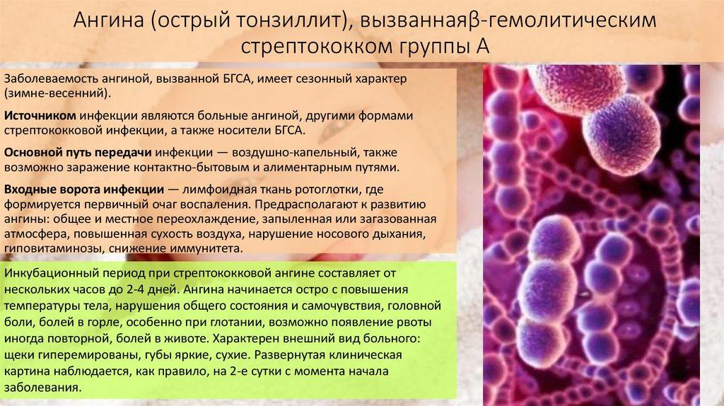 Стрептококк. симптомы, причины, виды, анализы и лечение стрептококковой инфекции