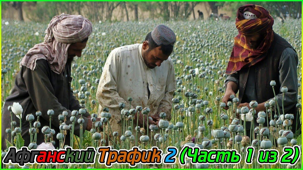 Как выбивают экстракт из маковой соломы и употребляют опиум наркозависимые