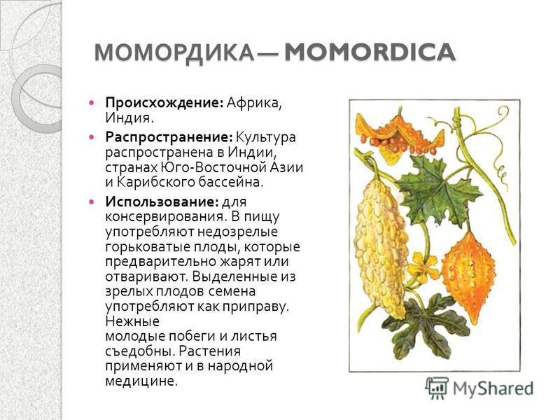 Момордика лечебные свойства