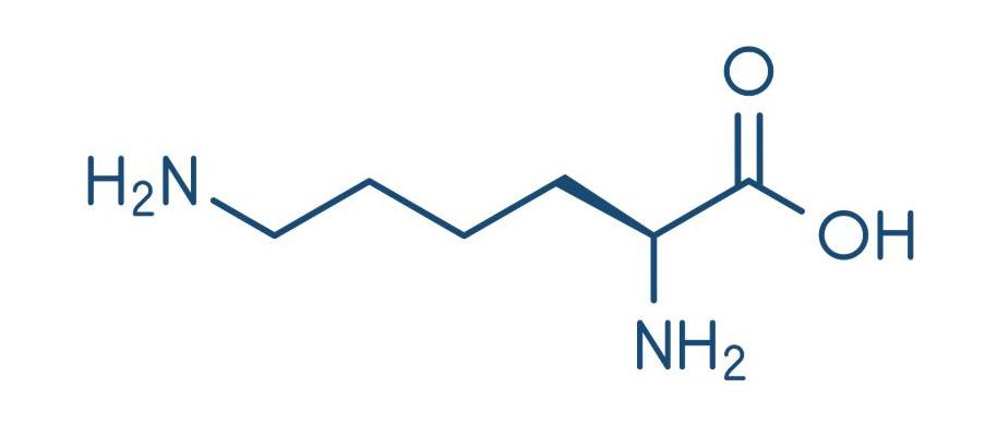 Лизин польза для здоровья. 10 причин принимать добавку l-лизин