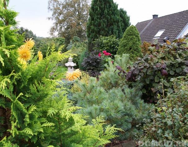Обязательно посадите: 6 необычных хвойных растений, которые зимуют в средней полосе | в цветнике (огород.ru)
