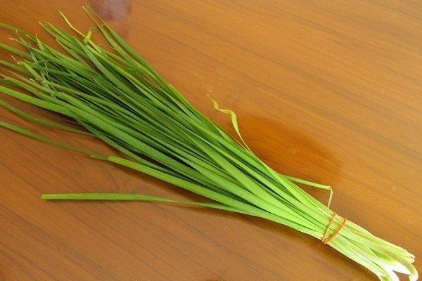 Полезные свойства растения джусай