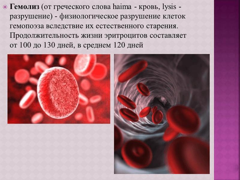 Что такое гемолиз и почему возникает