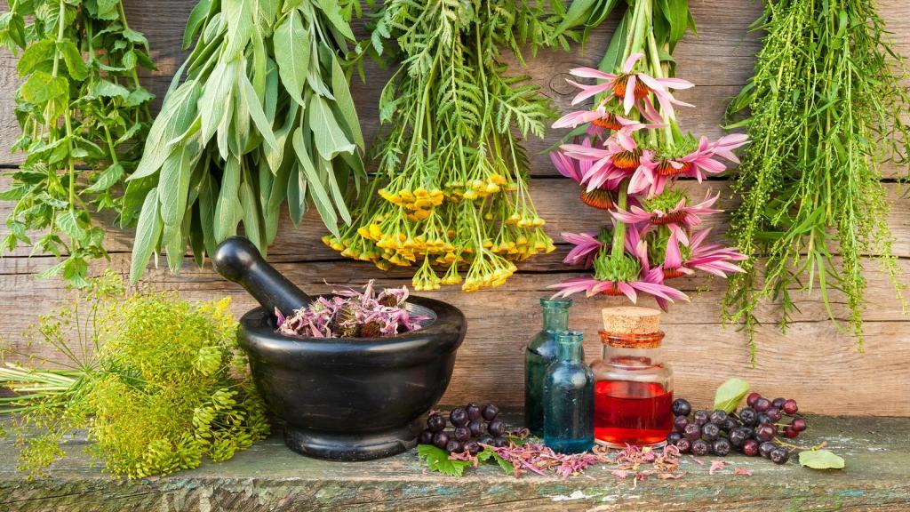 Лечебные и полезные свойства чистотела и противопоказания
