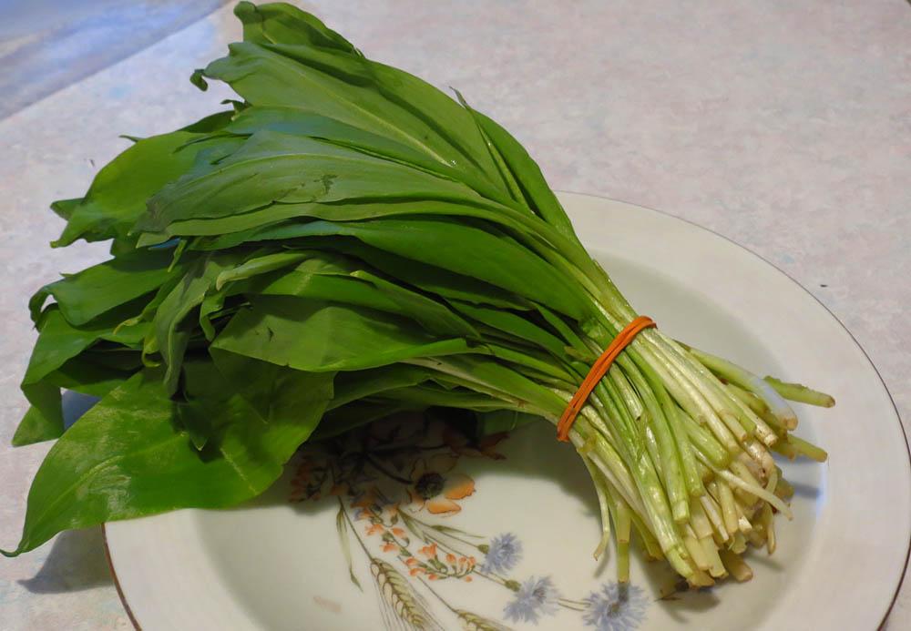 Черемша (лат. allium ursinum) – полезные свойства, методы заготовки, применение в кулинарии и народной медицине