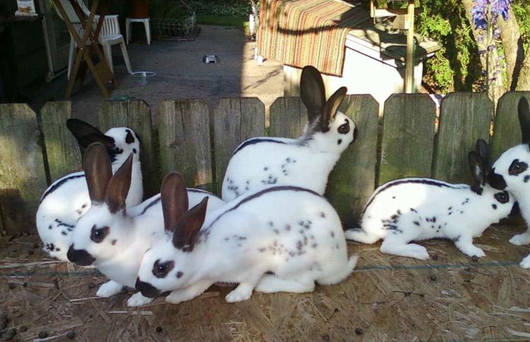 Кто такие кролики?   обучонок
