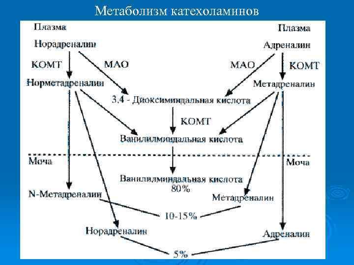 Катехоламины — википедия с видео // wiki 2