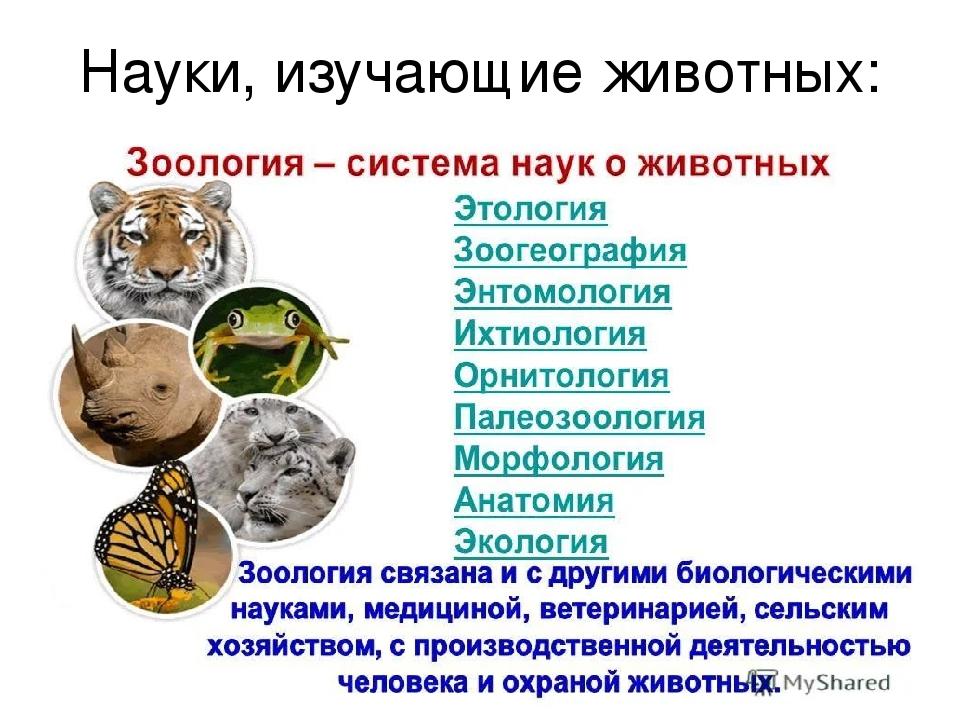 Зоолог, суть профессии, ученые-зоологи, обязанности