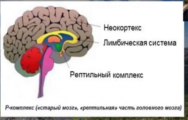 Неокортекс – это то, что делает человека человеком