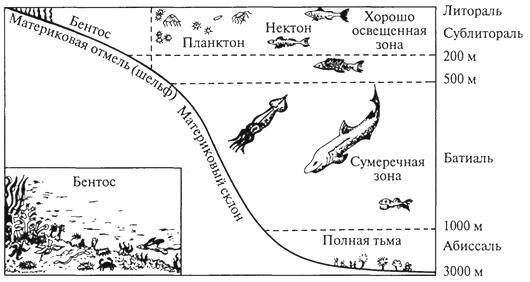 Характеристики нектона, питание и примеры нектонных организмов