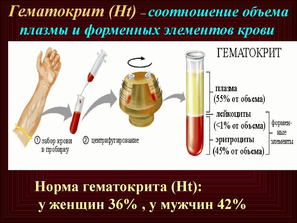 Гематокрит - что это такое, выявление и определение степени анемии у детей и взрослых