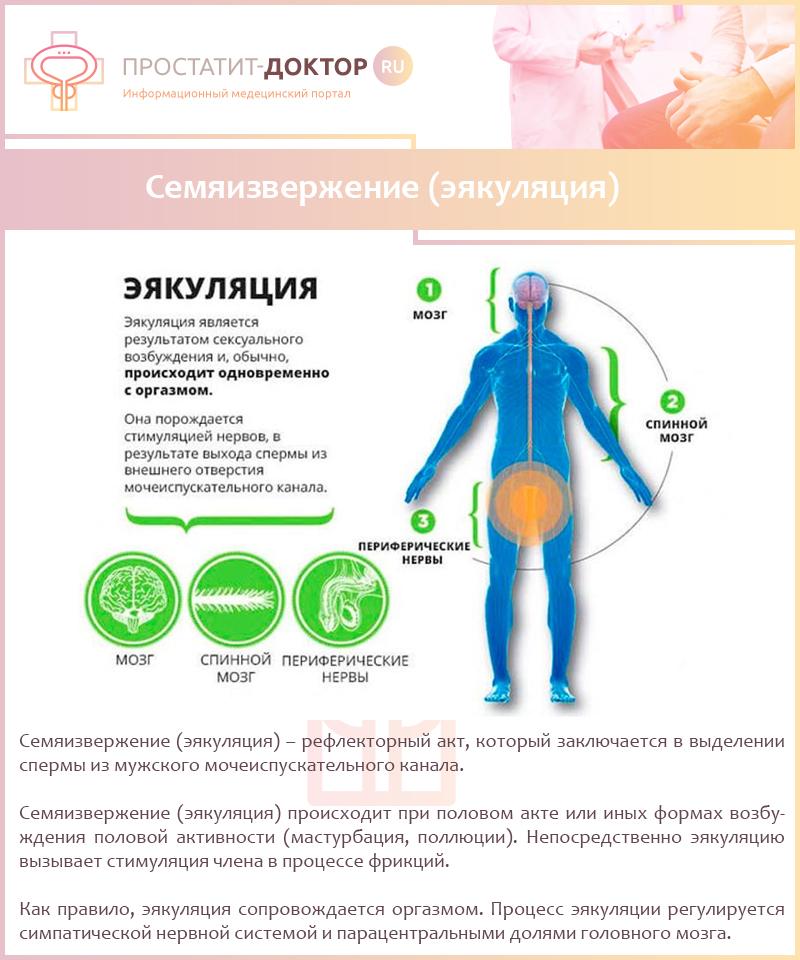 Эякуляция: преждевременное семяизвержение, причины, лечение быстрой эякуляции