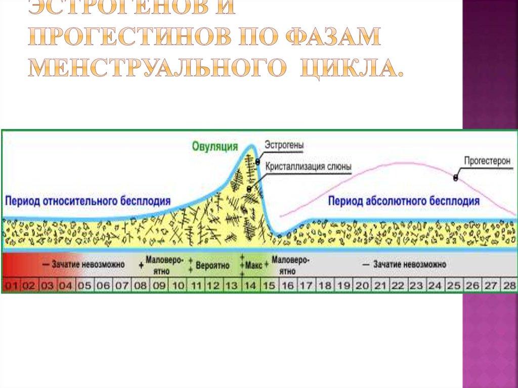 Лютеиновая фаза менструального цикла: начало и длительность, показатели прогестерона