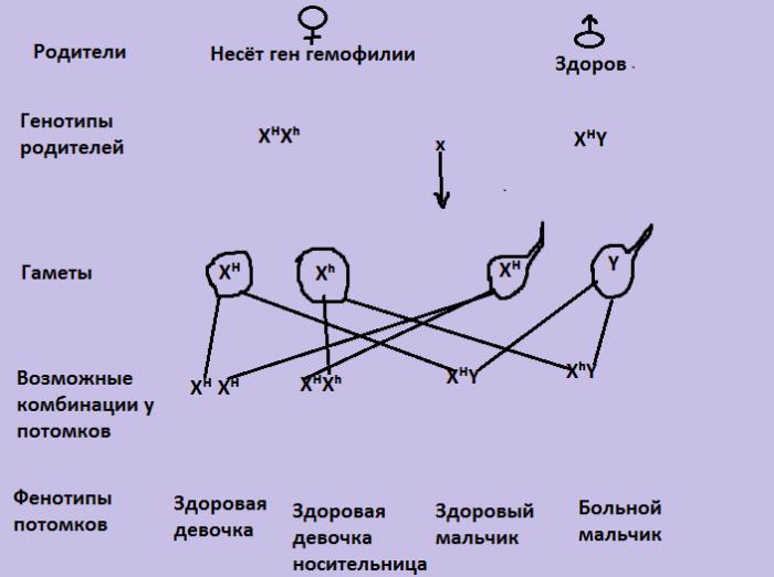 Половой хроматин — большая медицинская энциклопедия