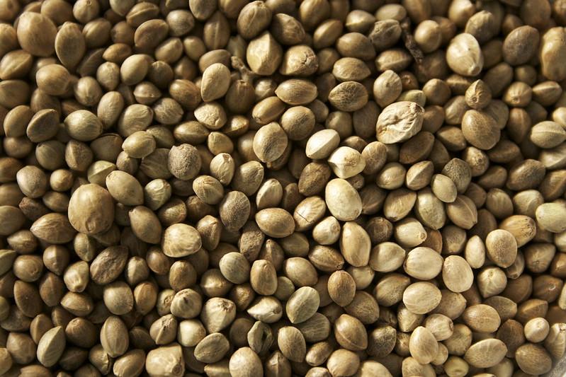 Семя — википедия. что такое семя