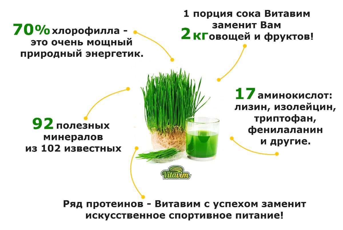 Как это сделано: сок изростков пшеницы «витграсс» / новости общества красноярска и красноярского края         / newslab.ru