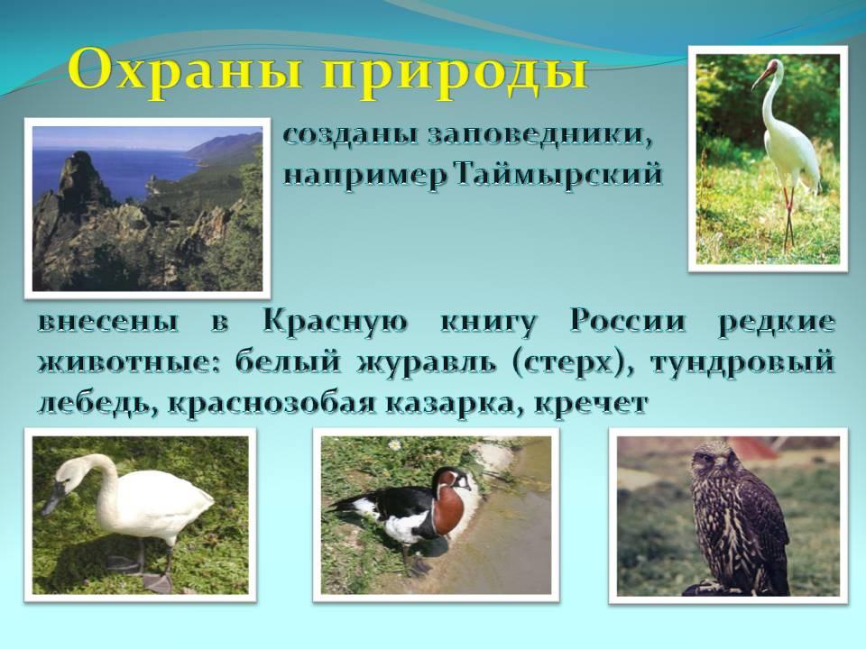Правила охраны природы: принципы и примеры  — новости оптом