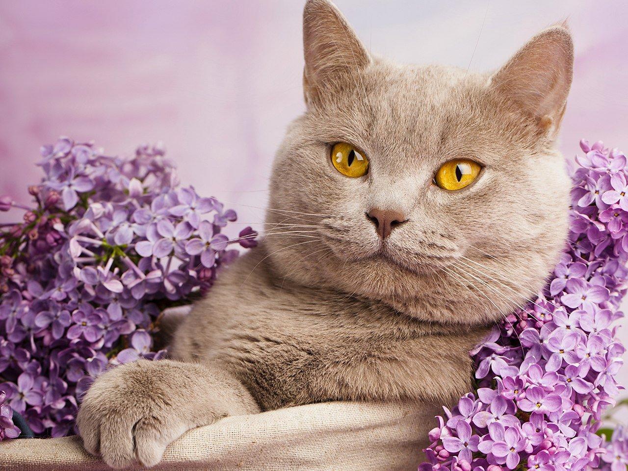 Котик, ян — википедия. что такое котик, ян