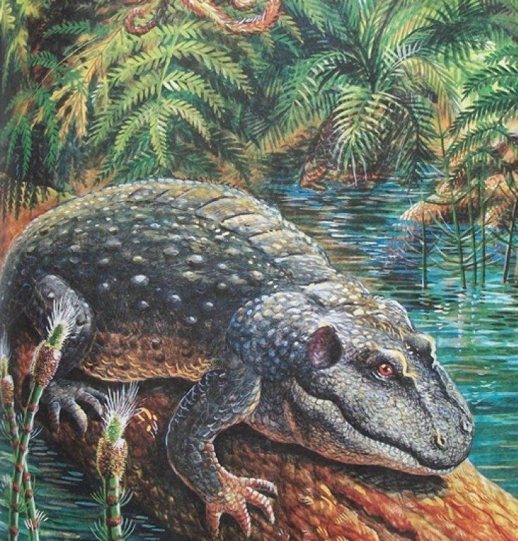 Палеонтология это наука исследующая организмы прошлого по их ископаемым остаткам и следам жизнедеятельности