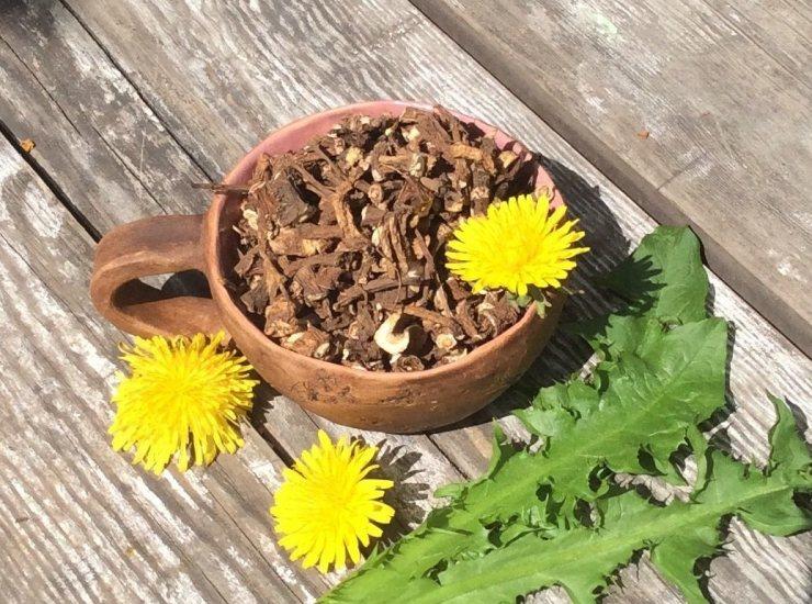 Одуванчик — лечебные свойства и применение в народной медицине